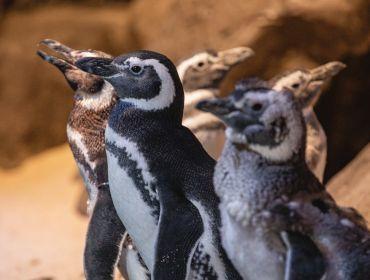 Oceanic Aquarium - O maior aquário do sul do Brasil